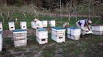 5-10-14蜜蜂2.jpg