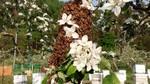 5-19-14-蜂の巣2-1.jpg