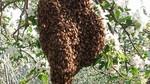 5-19-14-蜂の巣4-1.jpg