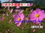 IMGP0519-1.jpg